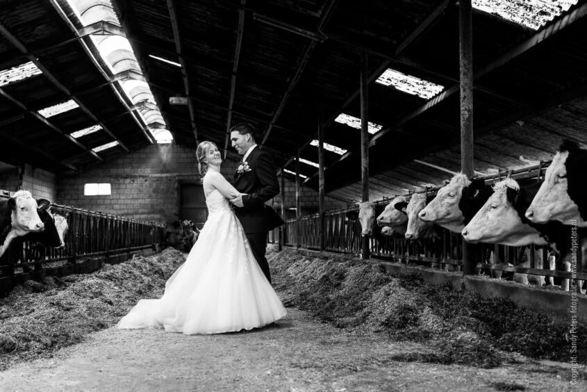 Bruidsreportage op de boerderij in Schaijk tussen de koeien